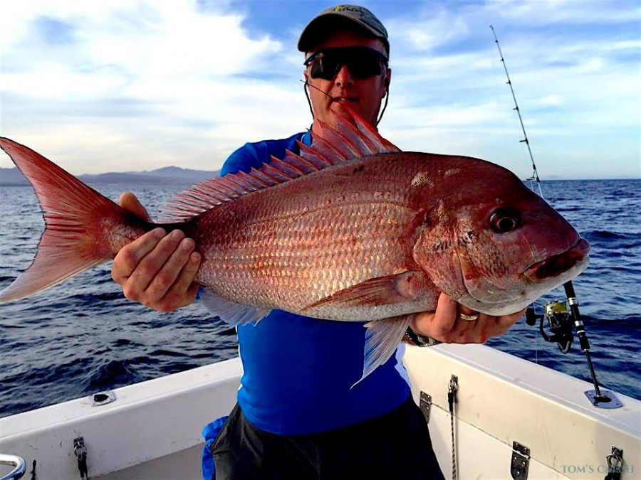Fishing Charter AlbakoraCat
