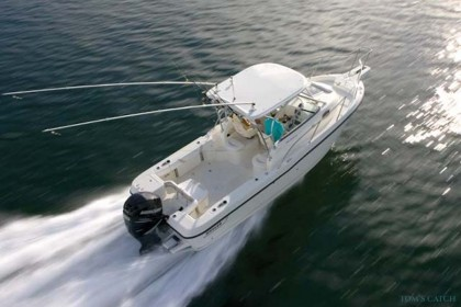 Boston Whaler Malta angeln