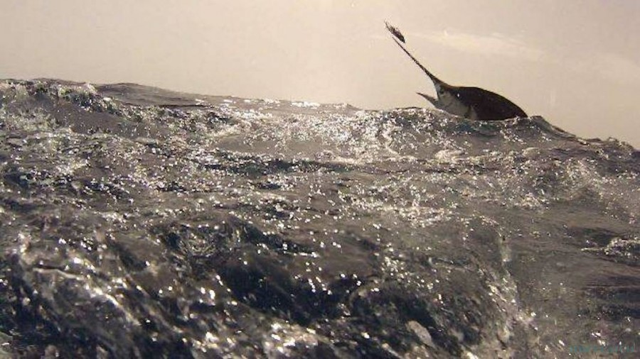 Geführte Angeltouren Crested Wave