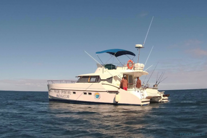 Angel Charter Dolphin
