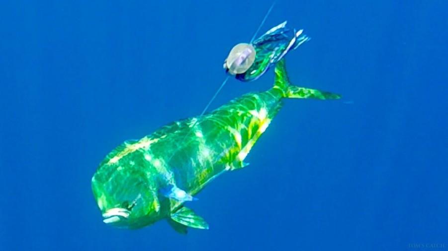 Geführte Angeltouren Fish On