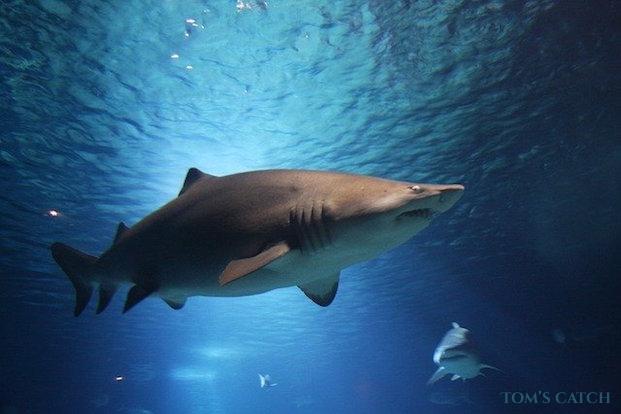Haifischen