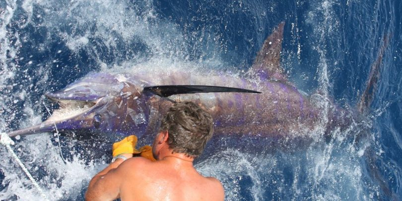 Blue Rampage Albufeira grander marlin fishing