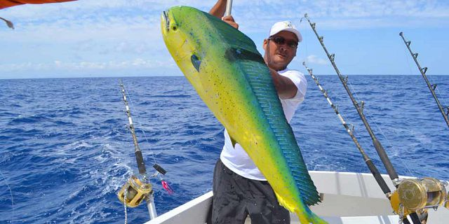 Amazing Colouring - Dorado