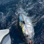 Bluefin Tuna released in March 2020 on the Cavalier in Gran Canaria