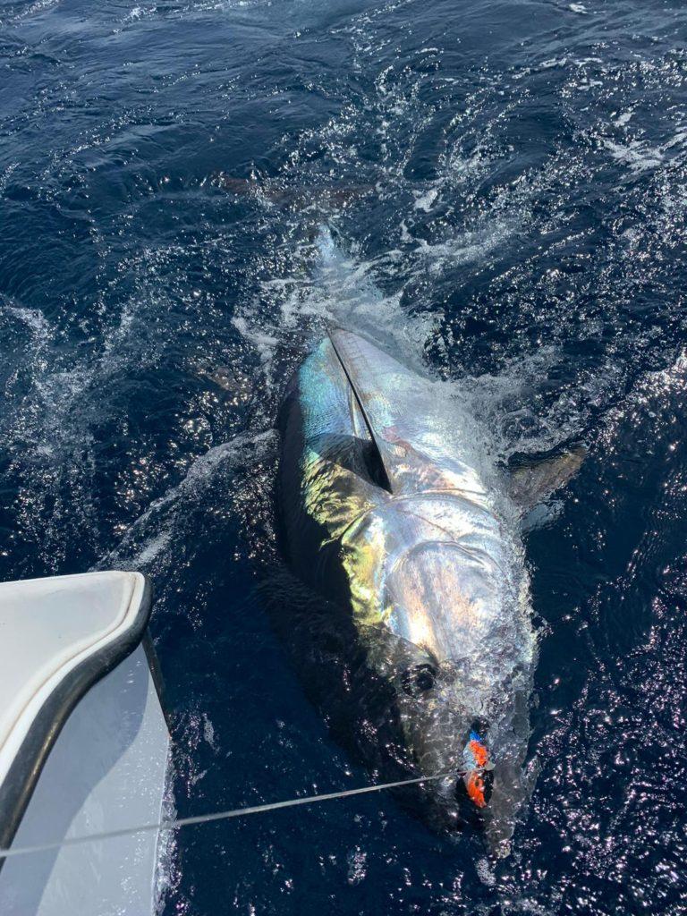 Bluefin Tuna catch & release on the Cavalier in Gran Canaria