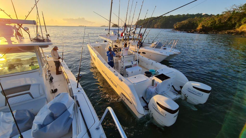 33ft TOP Cat Sport Fishing boat