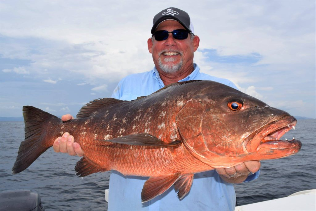 Cubera Snapper Sport fishing in Panama