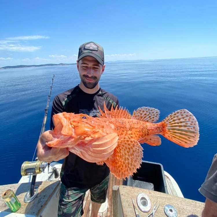 Scorpion fish caught in Croatia