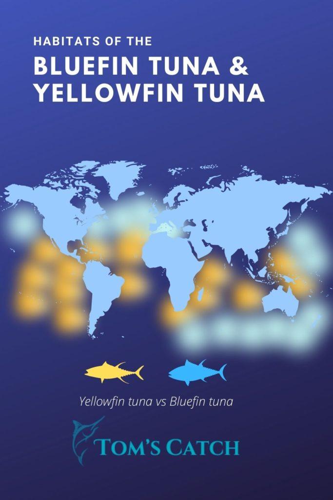 Distribution and habitats of yellowfin and bluefin tuna