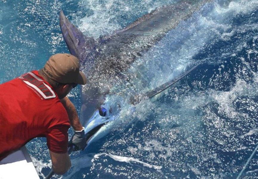 Charter de pesca Amelia