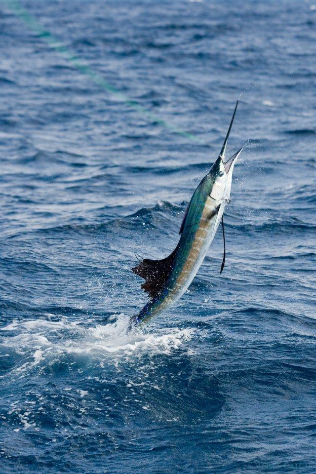 Charter de pesca Andrea M