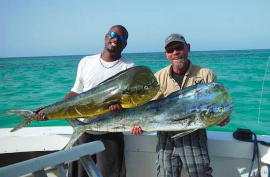 Charter de pesca Bertram 31