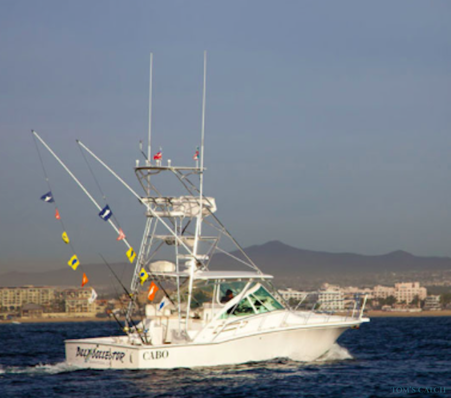 Charter de pesca Bill Collector