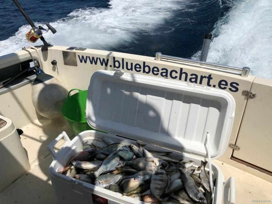 Charter de pesca Blue Beach