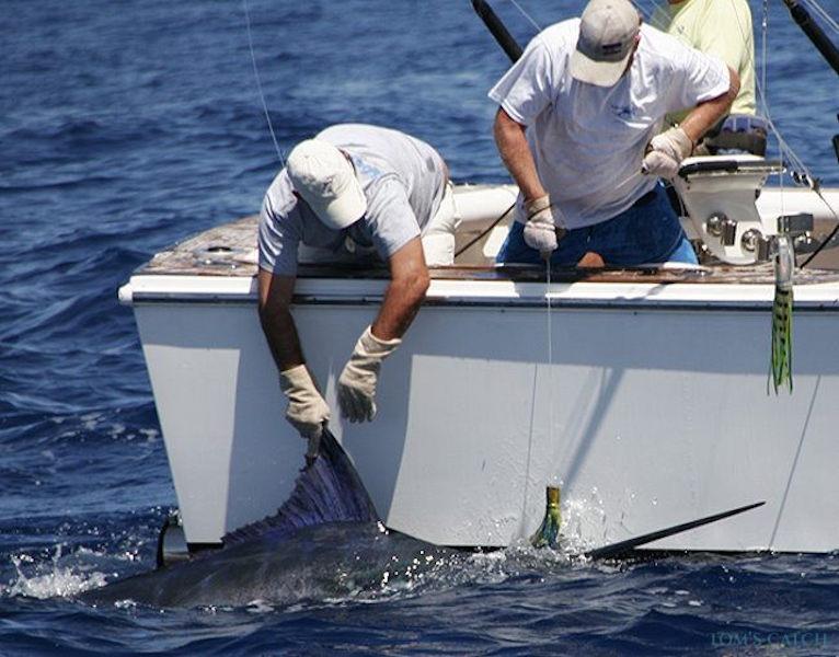 Charter de pesca Boca Raton