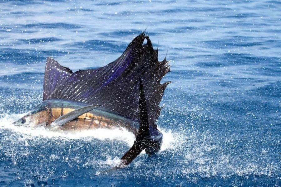 Charter de pesca Catamaran Nosy Bleu