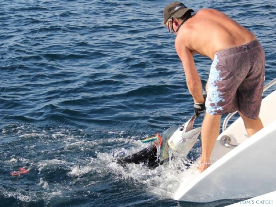 Charter de pesca COBIA