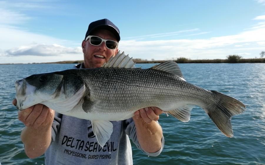 Charter de pesca Delta Seadevil