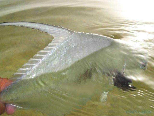 Charter de pesca Etec