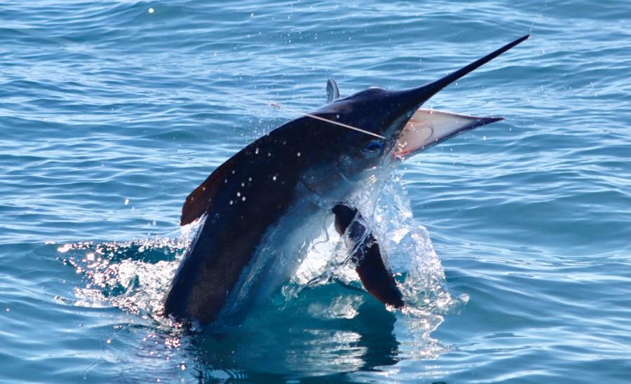Charter de pesca EVADER