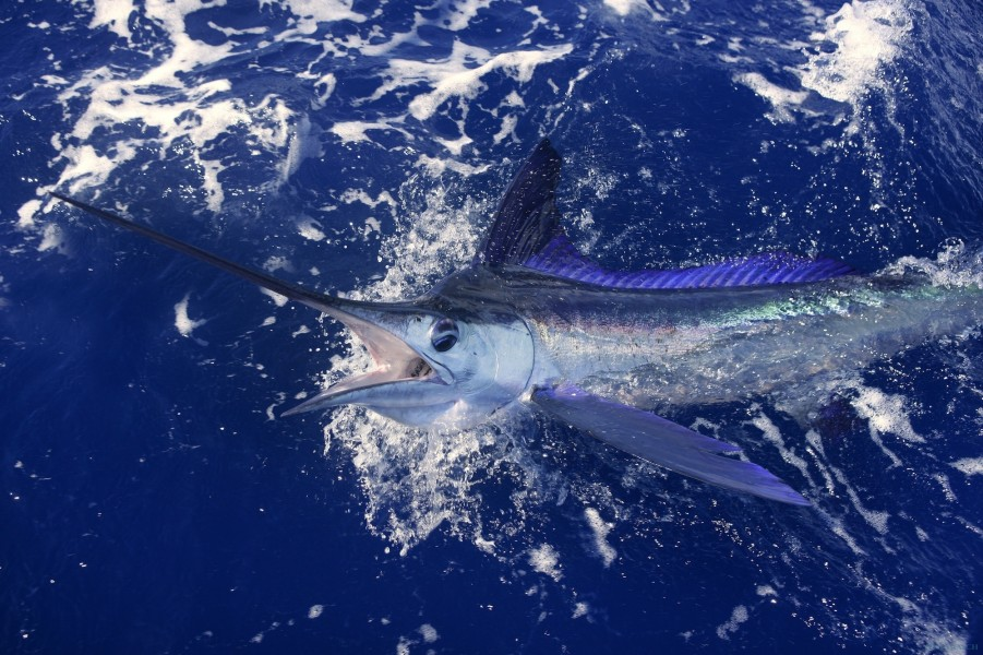 Charter de pesca Fenix Nian