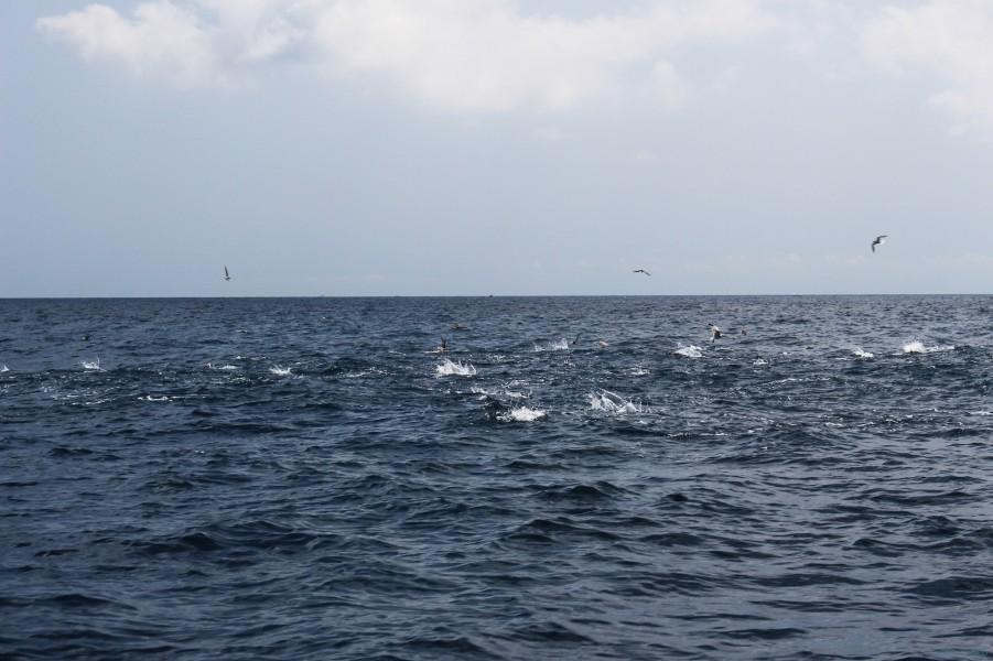 Charter de pesca Green Flake