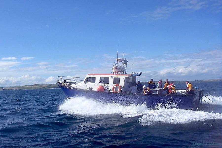 Charter de pesca Harpy