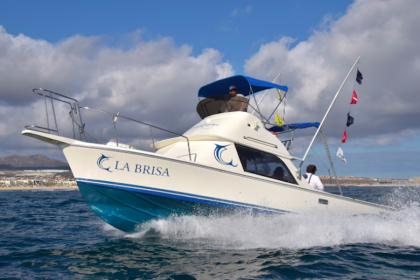 La Brisa Baja California Sur pesca