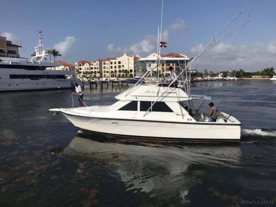 Charter de pesca Marlin Fever