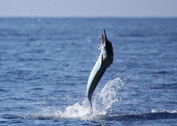 Charter de pesca Marlin Magic