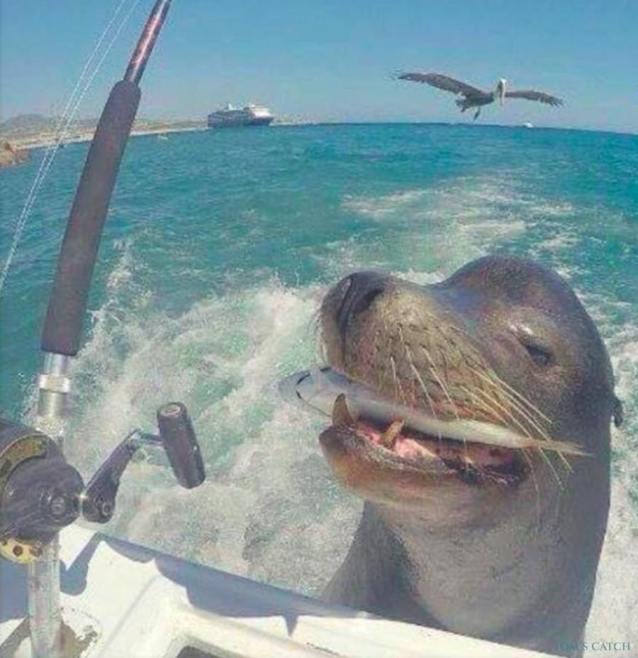 Charter de pesca Muchacho Alegre