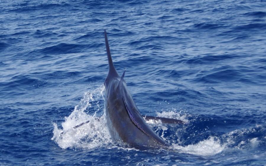 Charter de pesca Nell Magic