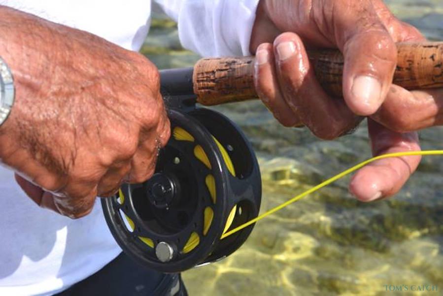 Charter de pesca Panga 23