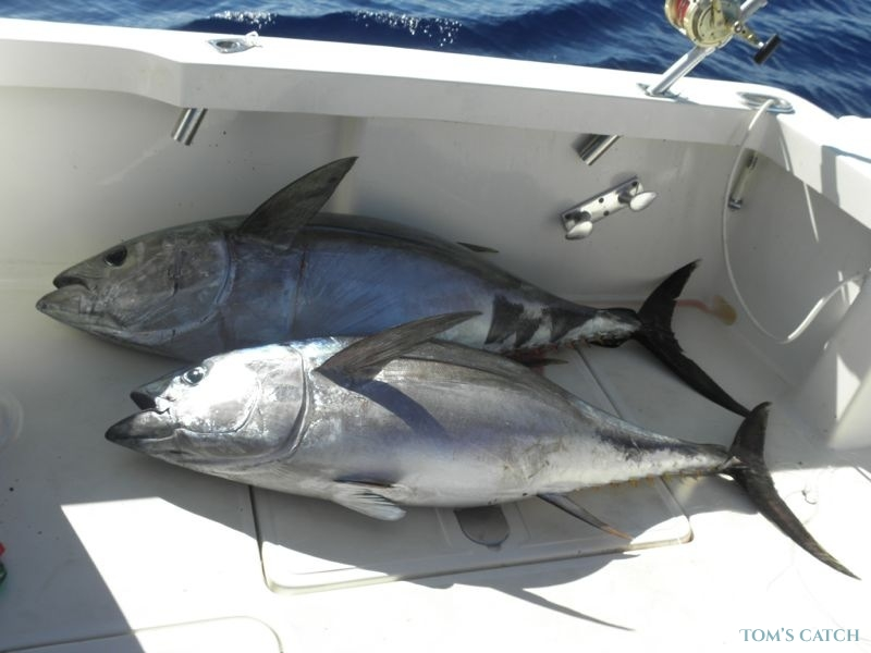 Charter de pesca Raggie Fishing