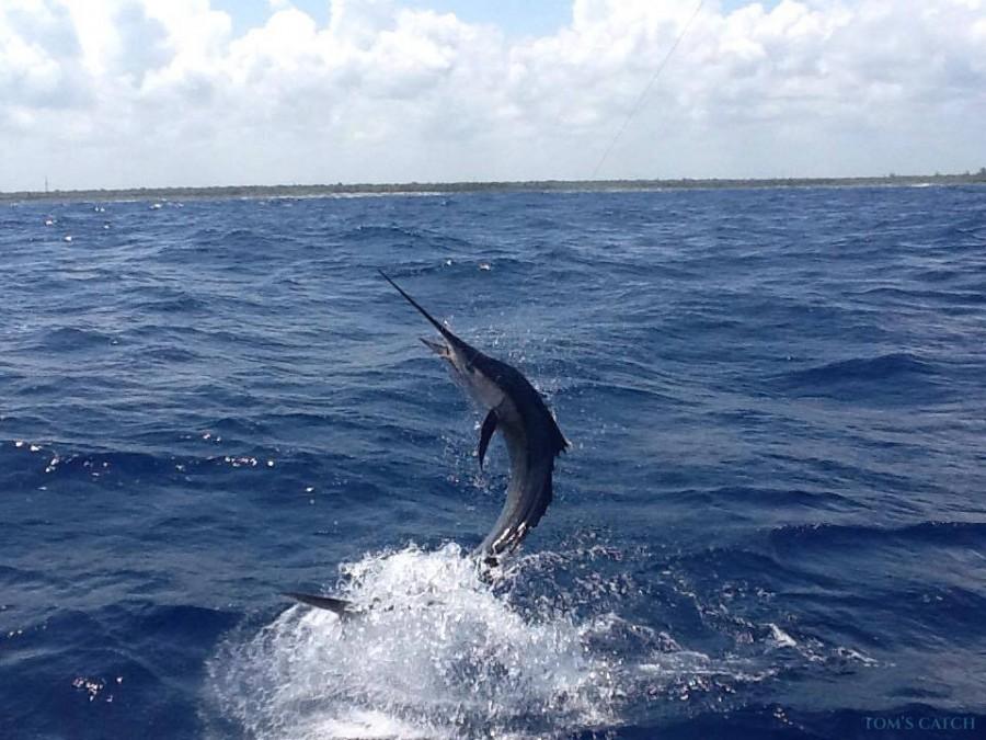 Charter de pesca Reel Stripper