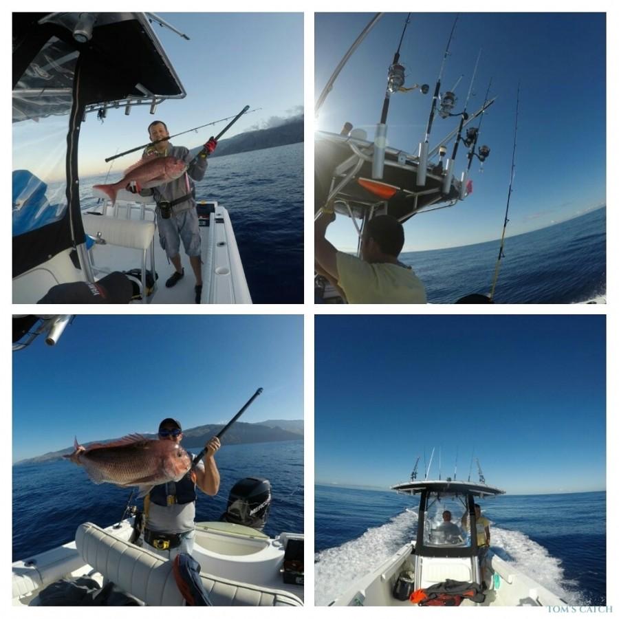 Charter de pesca Sea Fox 236 Madeira Sea Fishing