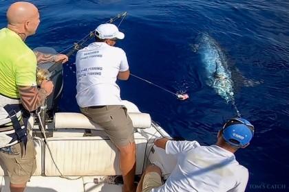 Charter de pesca Seazores