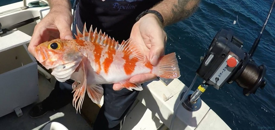 Charter de pesca Ultimate Predator