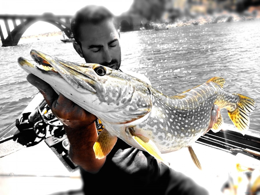 Charter de pesca X Predator Lodge