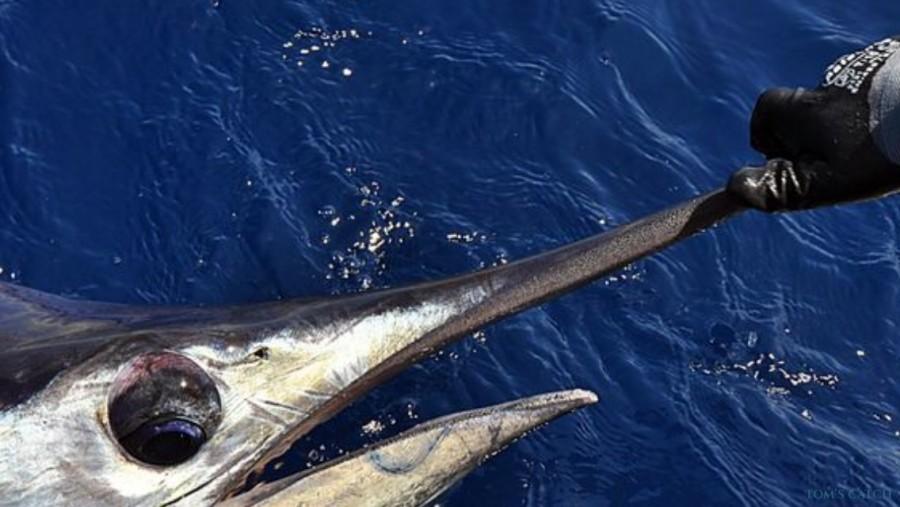 Charter de pesca Yate Sofia