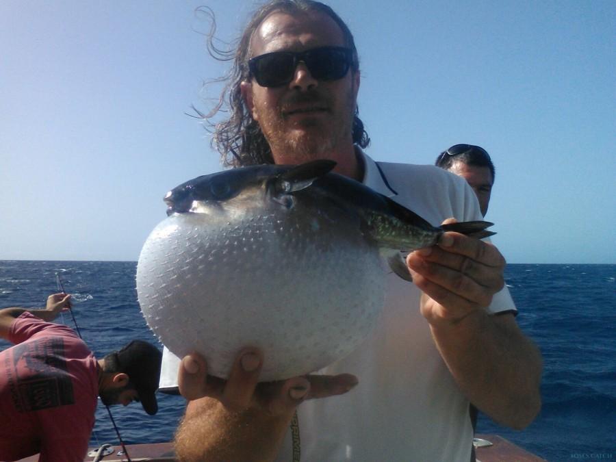 Charter de pesca Yellow Fin 1