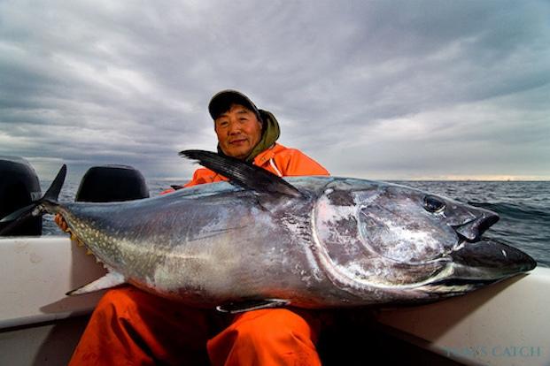 Blauflossen Thunfisch fischen