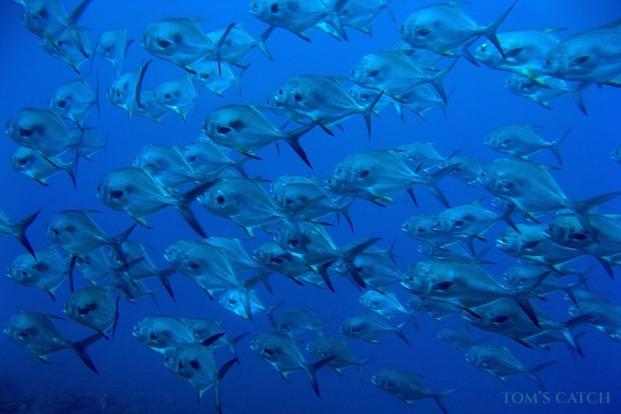 Permit fischen