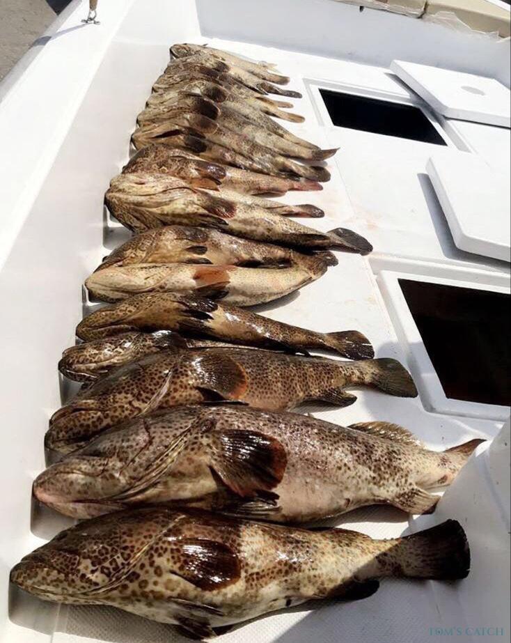 Fishing Charter Ajman 1
