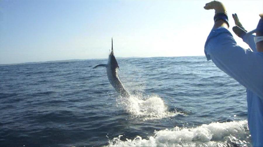 Fishing Charter Ambition Game Fishing Charters