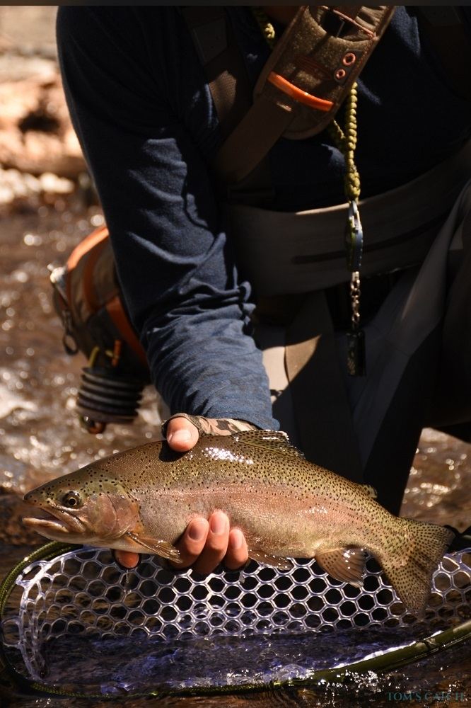 Fishing Charter Andes FlyCast