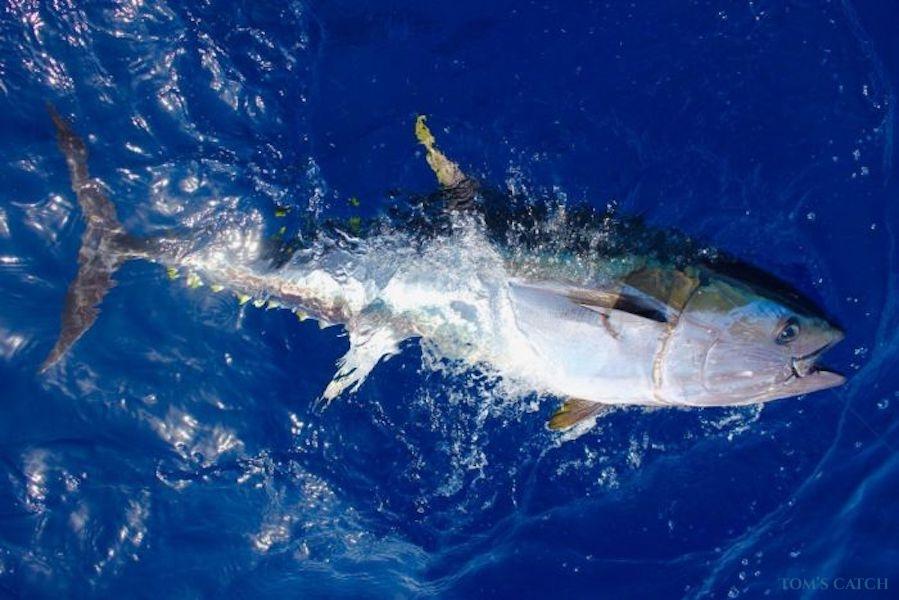 Fishing Charter Artena