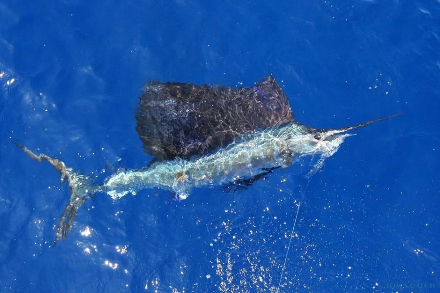 Fishing Charter Big Fish