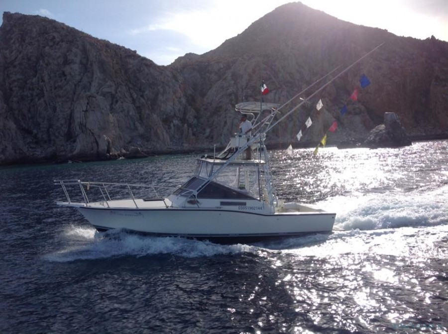 Fishing Charter Cabo Marlini 31